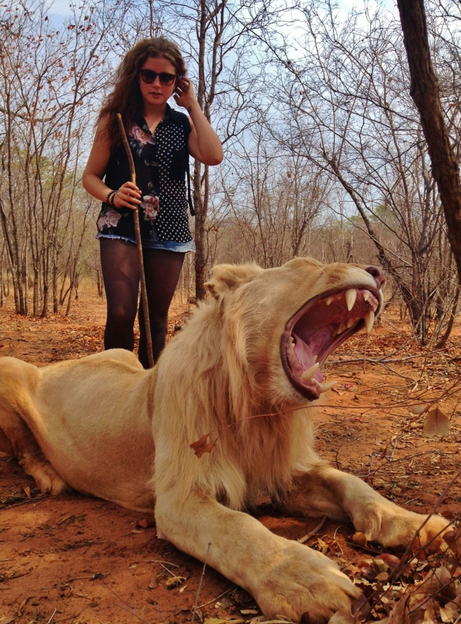 Lion taming in Zambia