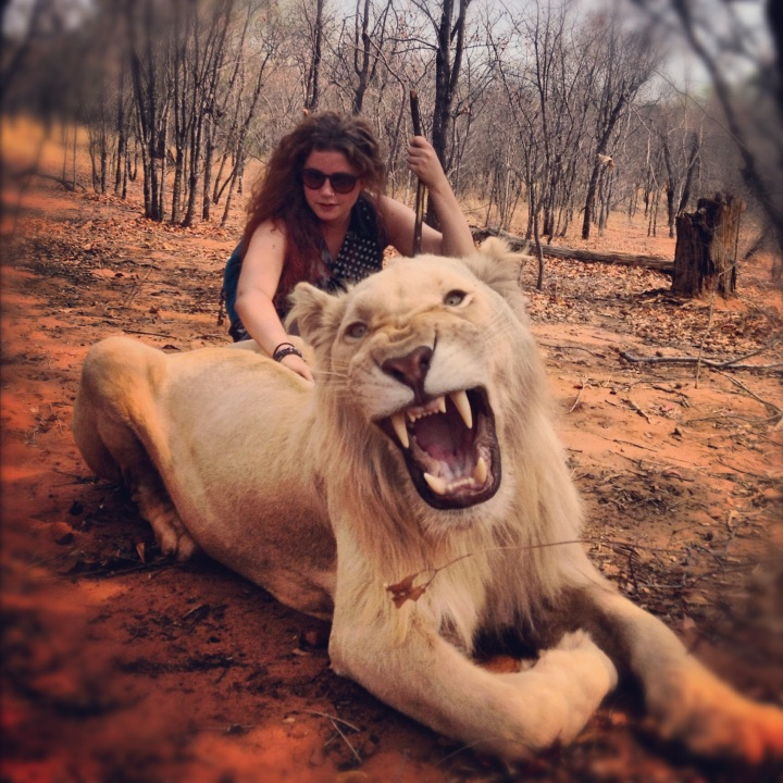 Taming Lions in Zambia