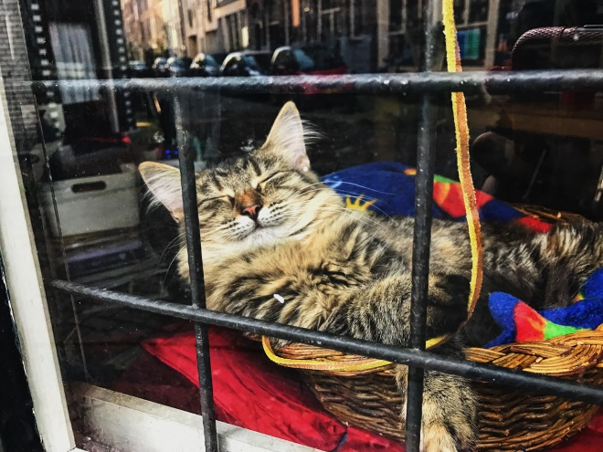 The cats of Amsterdam - Jordaan